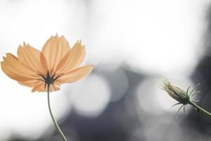 fiori gialli dell'universo e bokeh luminoso