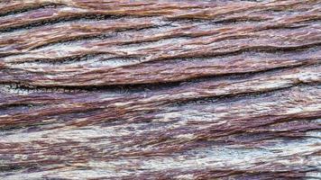 vecchio legno di corteccia di albero