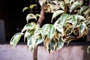 foglie verdi e bianche