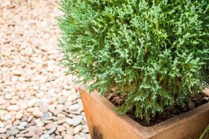 pianta verde in una pentola