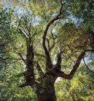 grande albero verde e luce solare nella foresta pluviale foto