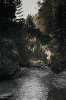 flusso d'acqua vicino agli alberi