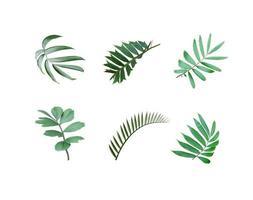 foglie verdi isolati su sfondo bianco