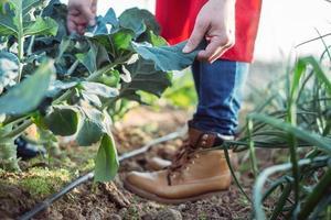 agricoltore esaminando le foglie di una pianta in un campo biologico