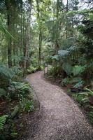 foresta con un sentiero foto