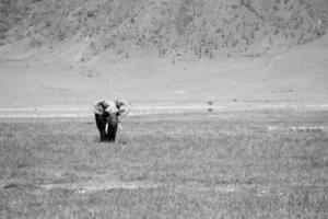 scala di grigi di un elefante sull'erba durante il giorno