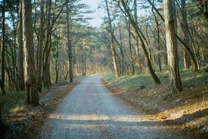 strada tra gli alberi durante la sera foto