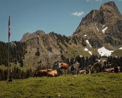 bestiame sull'erba durante il giorno