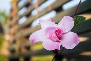 fiore rosa con petali foto