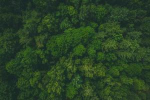vista a volo d'uccello della foresta foto