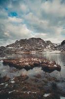 vista colorata di un pennello all'interno di un lago