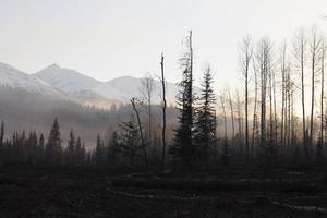 alberi di pino con le montagne sullo sfondo foto