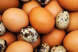 diversi tipi di uova