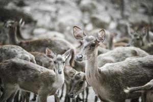primo piano del branco di cervi
