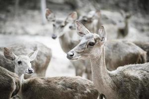 primo piano del branco di cervi. concetto di animali.
