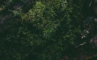cespuglio verde nella foresta foto