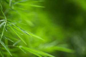 sfondo di bambù verde