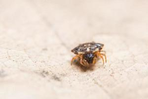 ragno su una foglia
