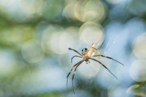 ragno nella ragnatela