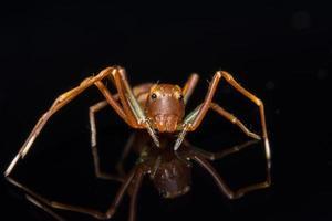 ragno sulla superficie di vetro