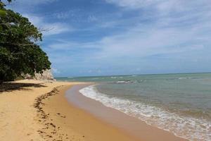 alberi su una spiaggia durante il giorno