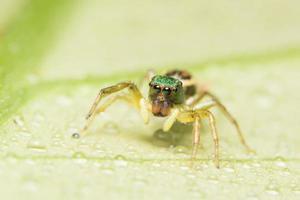 ragno su una foglia verde