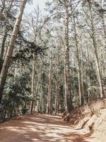 sentiero nel bosco per l'escursionismo