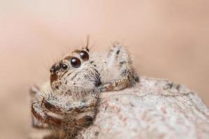 ragno su un albero