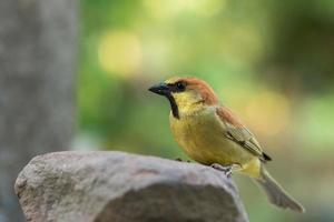 uccello su una roccia foto