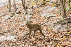 scimmia nella foresta foto