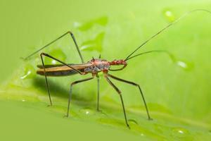 insetto su una foglia foto