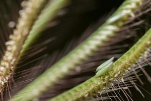 insetti su una pianta foto
