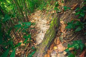 lussureggiante vegetazione forestale