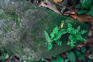 roccia nella foresta