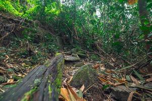 lussureggiante vegetazione della foresta tropicale