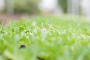 primo piano di piante verdi foto