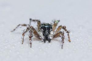 ragno marrone su una superficie bianca foto