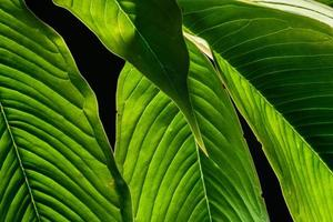 sfondo verde foglia, primo piano foto