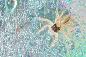 ragno su superficie bagnata