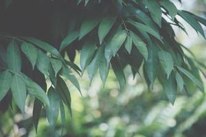 sfondo foglia, foto in primo piano