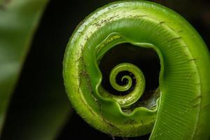 pianta verde su sfondo nero foto