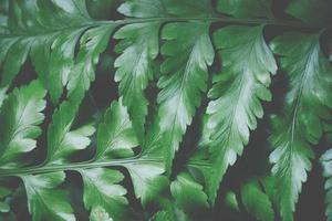sfondo verde foglia, primo piano