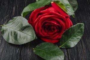 primo piano di una rosa rossa su uno sfondo di legno
