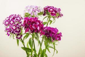 mazzo di garofani viola su sfondo bianco foto