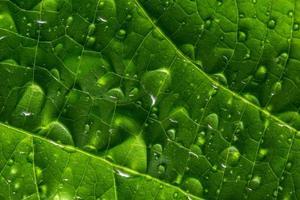 gocce d'acqua su una foglia verde