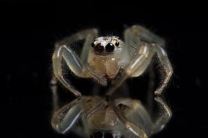 ragno su una superficie nera
