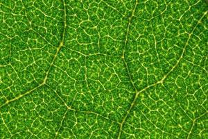 sfondo verde foglia