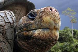 tartaruga delle Galapagos