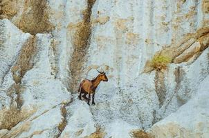 maiorca, spagna, 2020 - dipinto di un alce su una parete di una grotta foto