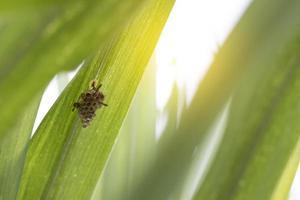 insetto su una foglia